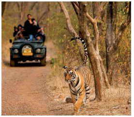 6 Wildlife Destinations in India You Need To See Now