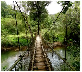 Why Coorg Should Be Your Next Travel Destination