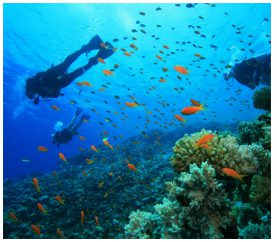 Top 5 Breathtaking Places To Go For Scuba Diving In India