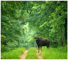 Experience The Wildlife In Chhattisgarh Like Never Before
