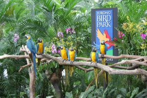 1-jurong-bird-park-1 (Jan from Singapore via Wikimedia Commons)
