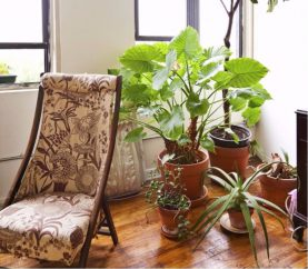How To Decorate Your Home With Indoor Plants