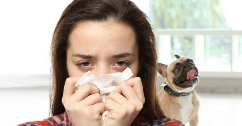 7 Ways To Tackle Pet Allergy